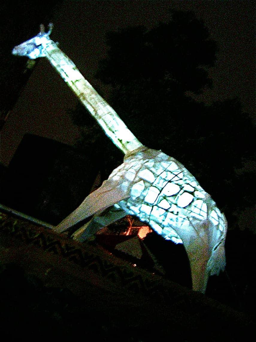 giraffe-lantern by Malia Burkhart